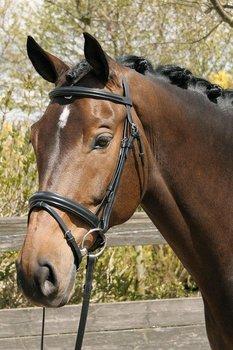 hoofdstel gold zwart, Harry`s Horse