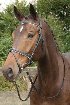 hoofdstel bronze zwart/wit, Harry`s Horse