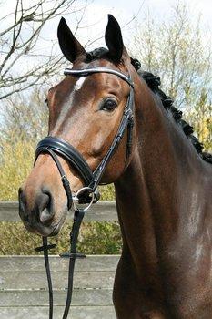 Hoofdstel luxe crystal wing zwart, Harry`s Horse
