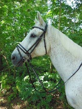 Horka Hoofdstel Stardust pony