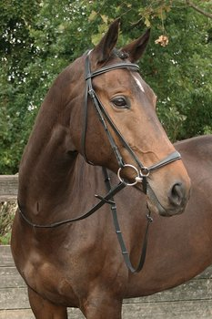 Harry's Horse Hoofdstel Bronze Shetland