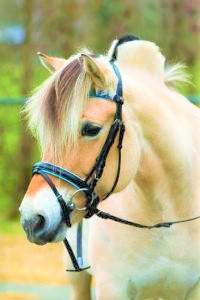Hoofdstel Antilope  Pony